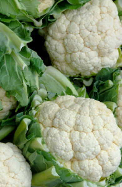 how to grow cauliflower from seed uk