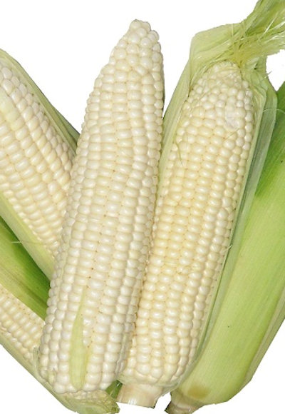 The Vegetable Seed Store Sweet Corn Seeds