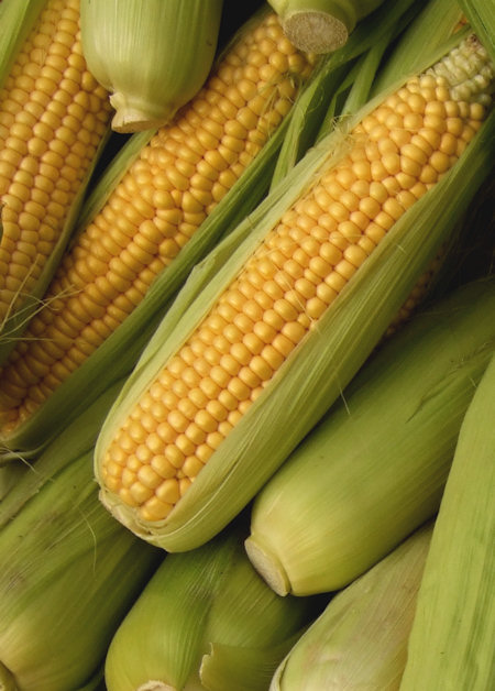 how to grow sweet corn from seed uk